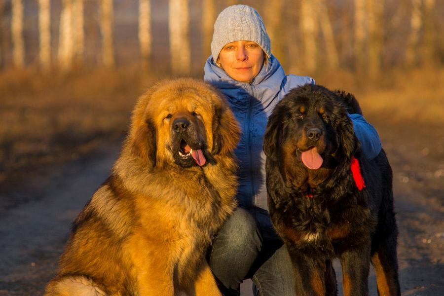 В Тамбове пройдёт выставка собак
