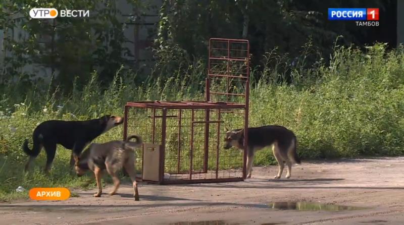 Зоозащитница пожаловалась в управление ветеринарии на зооприют в Бондарском районе