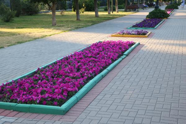 Дирекция благоустройства и озеленения украшала Тамбов непроверенными растениями
