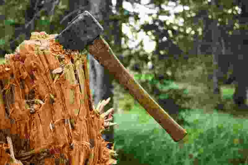 Двое жителей Никифоровского района незаконно срубили 20 кубометров дуба