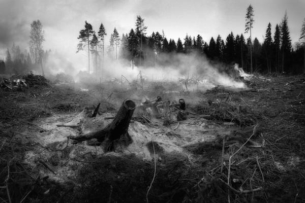 """""""Единая Россия"""": Средства на борьбу с лесными пожарами усилят систему лесоохраны"""