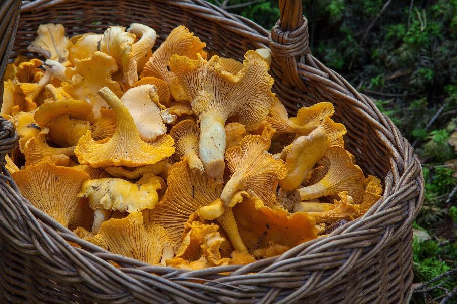 Названы действия при отравлении грибами