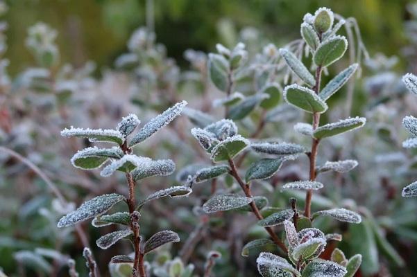 Синоптики предупредили о заморозках в Тамбове