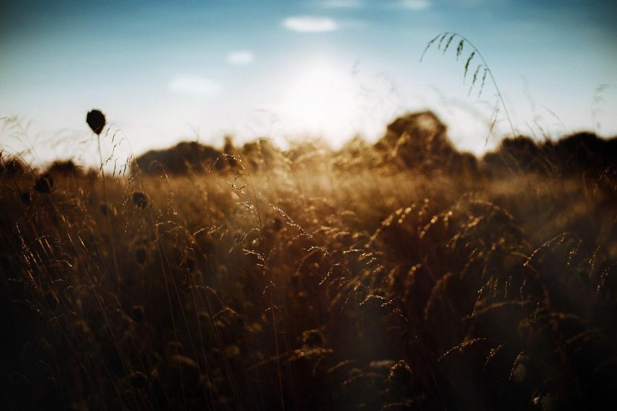 """Тамбовская область поучаствует в агропромышленной выставке """"Золотая осень – 2021"""""""