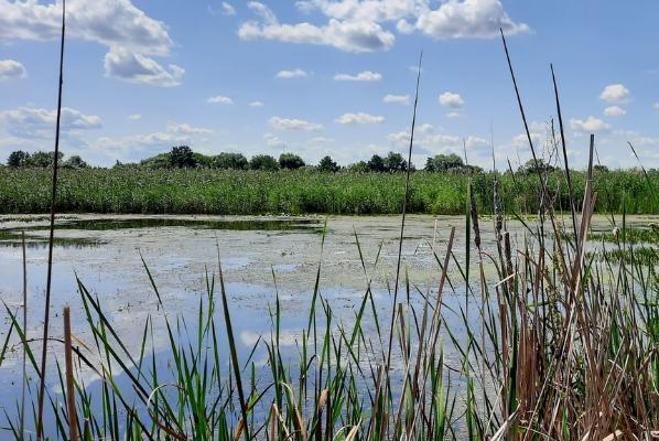 Тамбовская область вновь стала лидером экологического рейтинга страны
