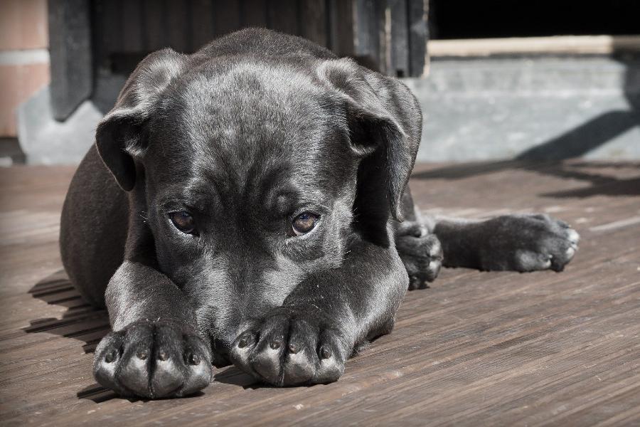 В Котовске начнут отлов бездомных собак
