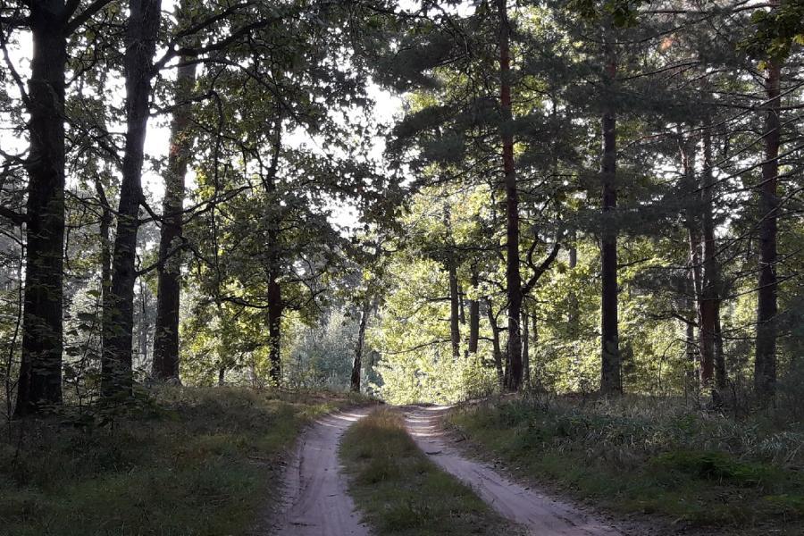 В России отмечается День работников леса