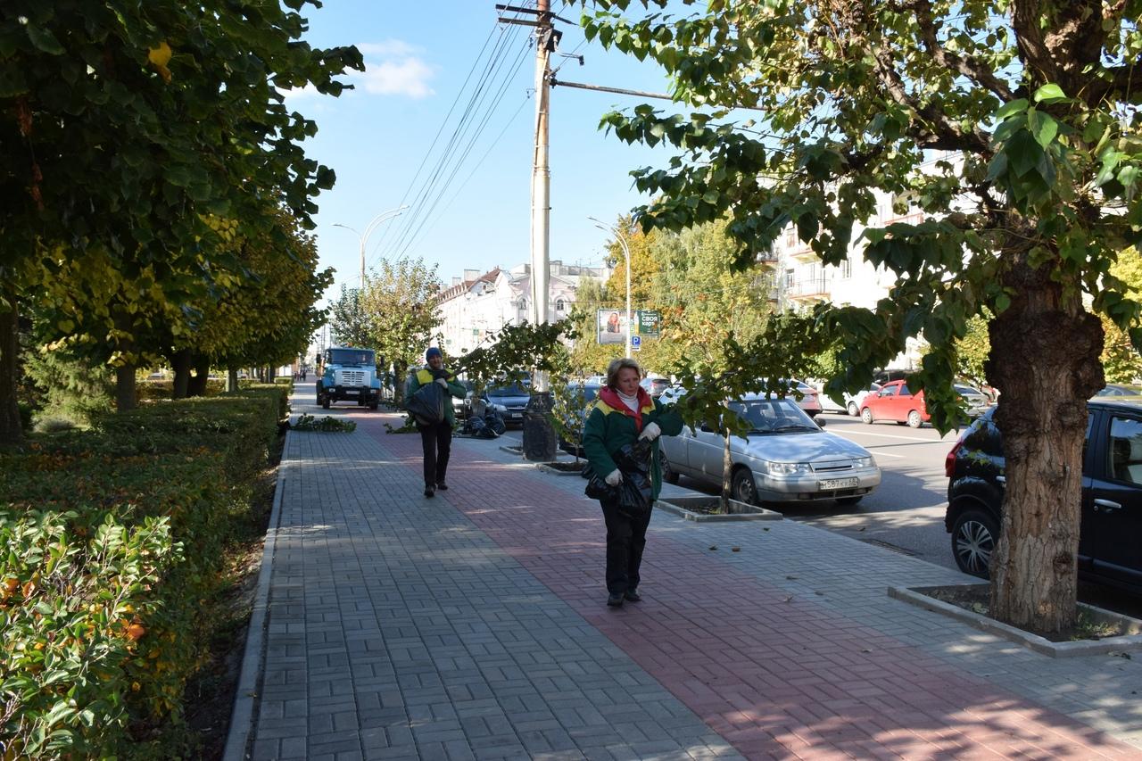 В Тамбове на Советской высаживают молодые липы