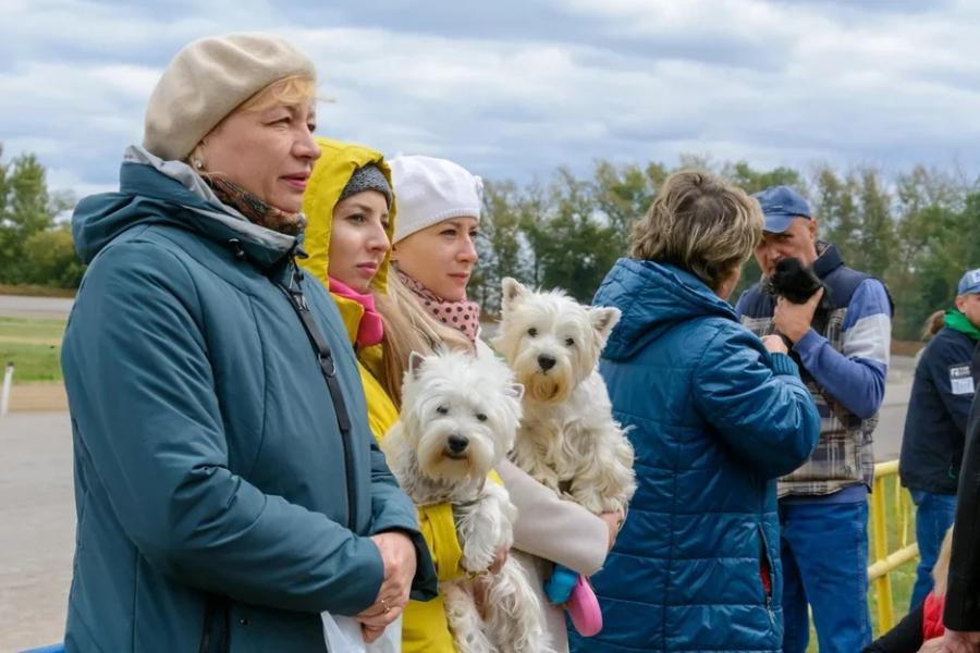 """В Тамбове прошла выставка собак """"Осенняя заря"""""""