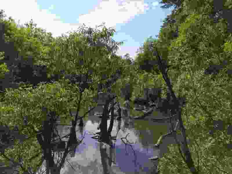 В Тамбове в 2022 году расчистят реку Студенец