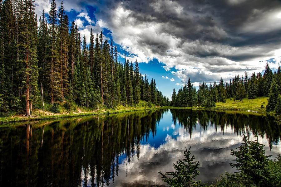 В Тамбовской области назвали лучшие школьные лесничества