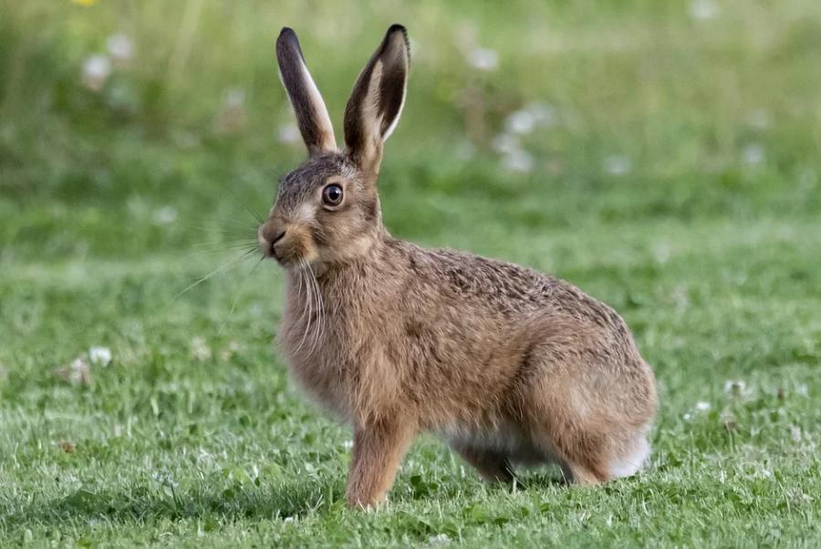В Тамбовской области откроют сезон охоты на зайцев и бобров
