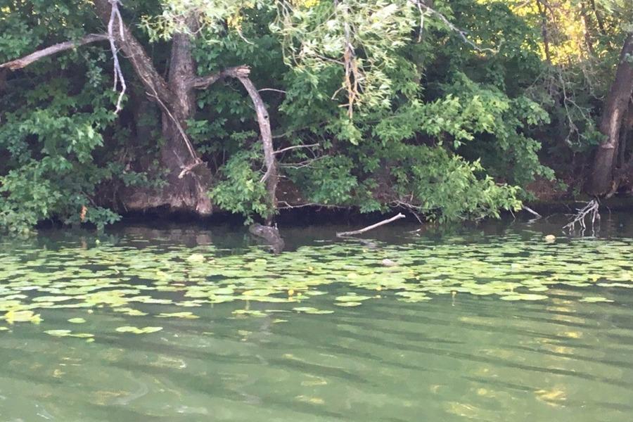 В Тамбовской области в водоём сбрасывали загрязняющие вещества