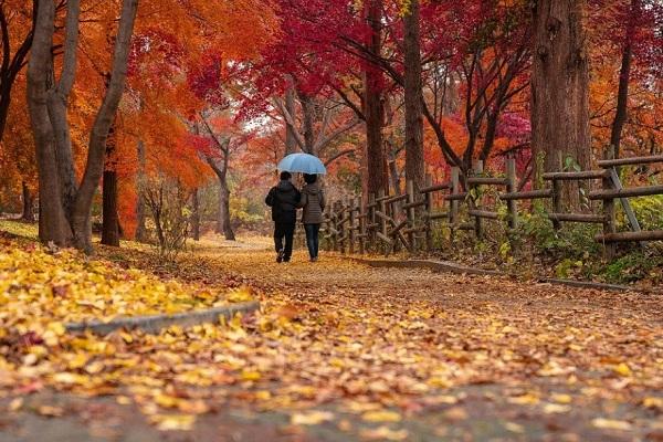 В Тамбовскую область приходит золотая осень