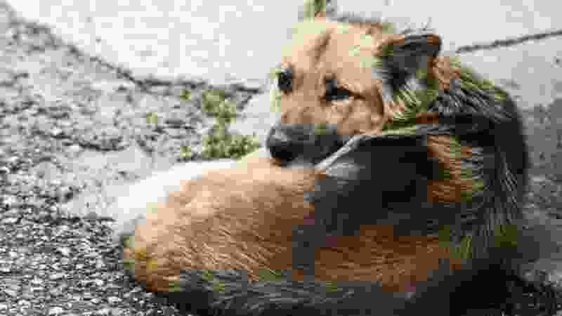 В Уварове уже чипировали и отпустили на волю около полусотни собак