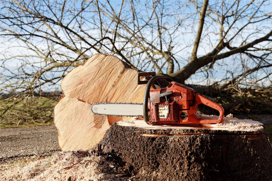 Жителей Тамбова обязали самостоятельно выпиливать аварийно-опасные деревья у газопроводов