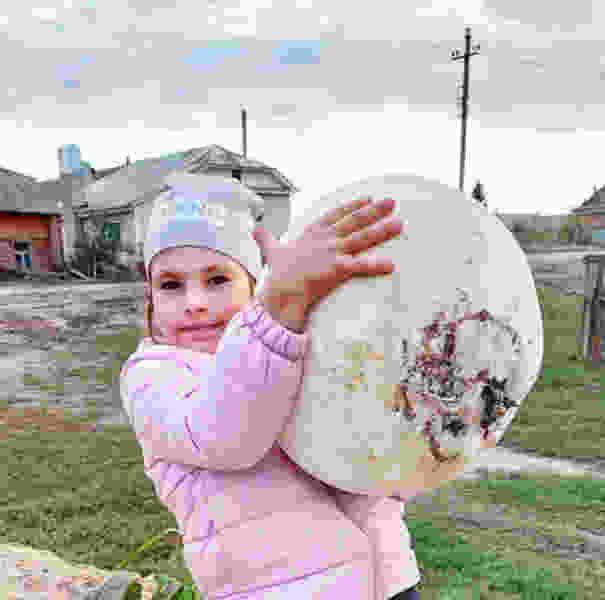 Гигантские грибы повадились расти в Петровском районе