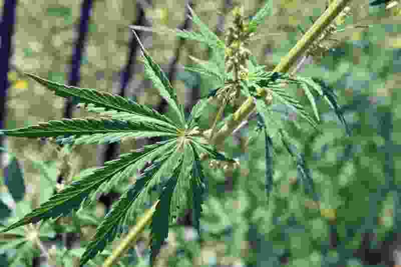 Полицейские задержали тамбовчанина со 150 граммами «волшебной травы»