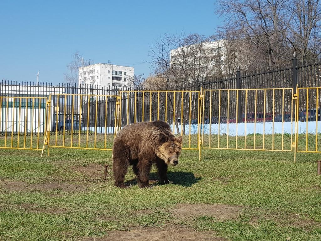 Семейный цирк-шапито на стадионе «Динамо» может остаться в Тамбове навсегда