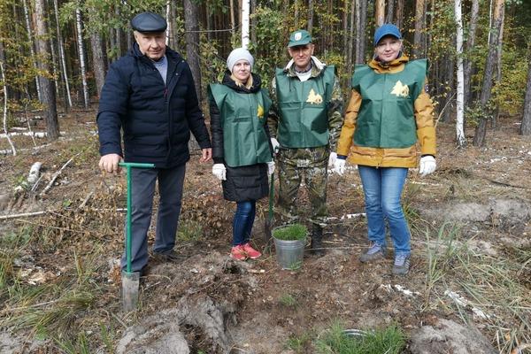 Тамбовские леса пополнятся 3,5 тысячами молодых сосен