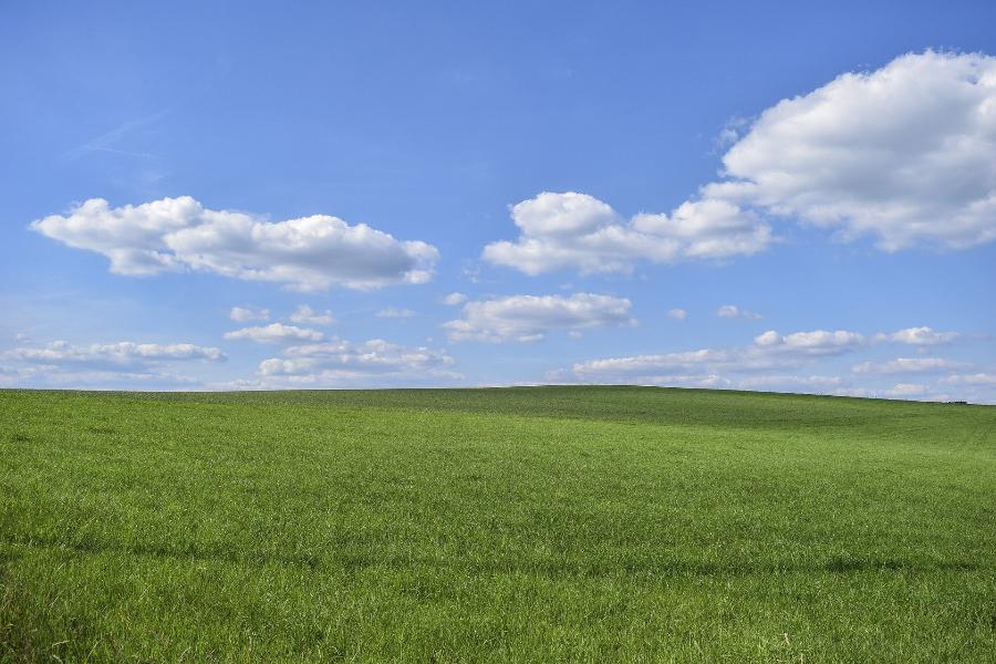 У одной из тамбовских агрофирм земельный участок зарос травой