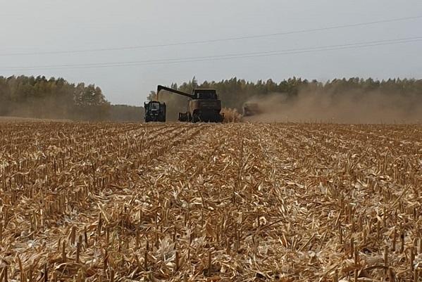 Урожай зерна в Тамбовской области превысил 3 млн тонн