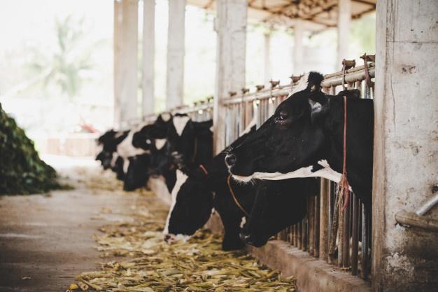 В пяти населённых пунктах Тамбовской области установлен карантин по лейкозу коров