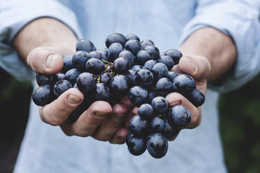 """В стране появится новая категория земель под """"возделывание винограда"""""""