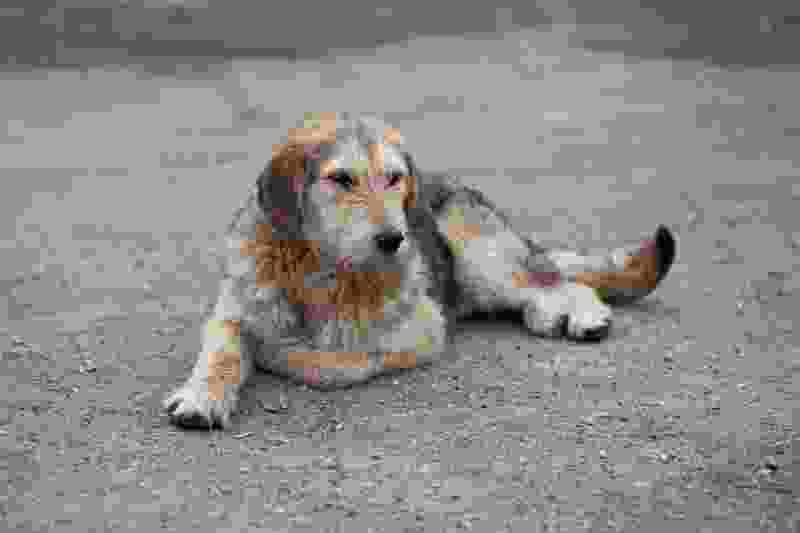В Тамбове бродячие собаки терроризируют маленьких тамбовчан