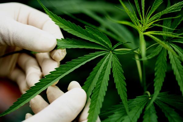 В Уварово задержали мужчину с 3 килограммами марихуаны