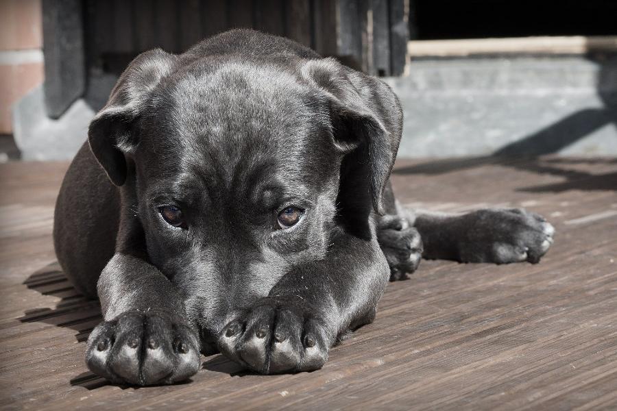 Вопрос с бродячими собаками в Тамбове остаётся открытым